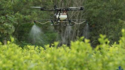 Controversia por uso del glifosato en lucha antidrogas