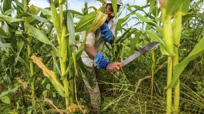 El agro fortalece la economía del Atlántico