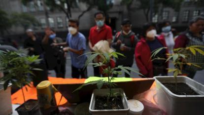 México despenaliza el consumo lúdico de marihuana