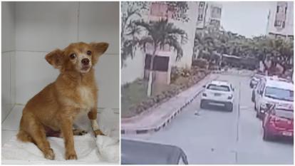 Indignación por hombre que atropella a un perro y lo deja morir