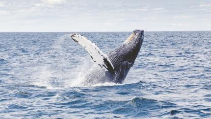 Día de las Ballenas y los Delfines: la lucha por preservar los cetáceos y frenar su caza