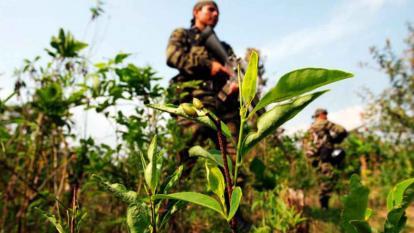 Unodc incluye a Bolívar en zonas con mayores incrementos de cultivos de coca