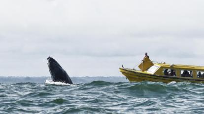 Avistamiento de ballenas: encanto profundo del Pacífico