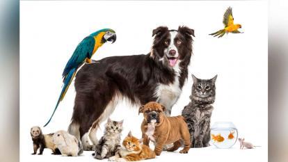 Síndrome de Noé: la obsesión de acumular animales