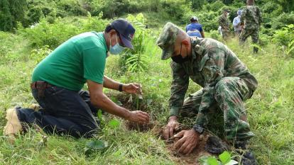 Continúan labores de reforestación en Córdoba