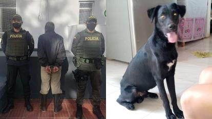 Judicializado por matar a un perro con arma traumática