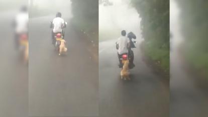 ¡Indignante! Perro fue atado a una moto y lo arrastraron por la carretera
