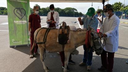Vehículos de tracción animal: Distrito reitera su compromiso de erradicarlos
