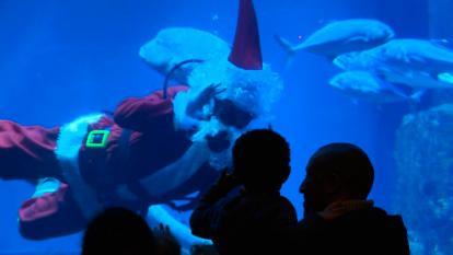 En video | Papá Noel se sumerge en el acuario de París