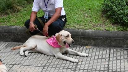 La unidad móvil canina que ayuda a detectar la covid en Tailandia