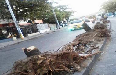 La Avenida del Río, luego de la tala de árboles para darle paso a la recuperación vial.