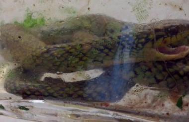 Esta foto fue tomada por miembros del Hospital para identificar al animal.
