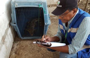 Funcionario del Damab realiza el registro de los animales que fueron incautados.