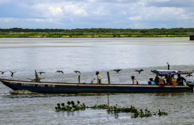 En el río Magdalena se ha registrado una disminución de las especies nativas.