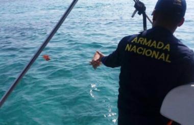 Personal de Guardacostas de la Armada Nacional regresó a las especies a su hábitat natural.