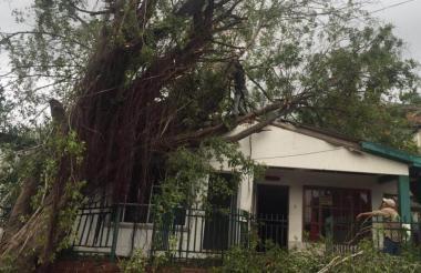 La tormenta tumbó varios arboles, dejó daños materiales y congestión vehicular.