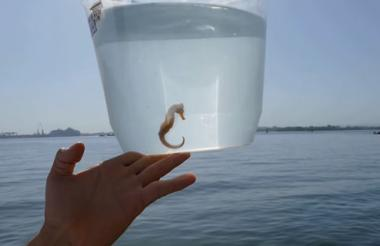 Caballito encontrado en las aguas de la bahía.