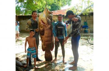 Mero de 120 kilogramos y 210 centímetros pescado en Puerto Colombia.
