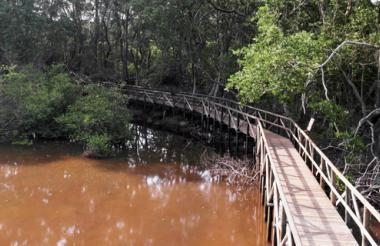Bosque de Isla Salamanca.