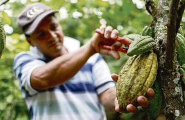 Entre 350 y 400 kilos por hectárea año es el promedio de producción nacional