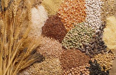 Con el verano de 2014 se dejaron de producir 300 mil toneladas de maíz en Colombia, según presidente de Fenalce.