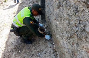 Uno de los policías hace la recolección de los caracoles africanos.
