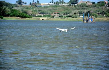 El 10 de enero se registró  el primer hallazgo de peces muertos en el lago.