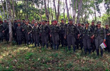 Algunos de los 300 guerrilleros que llegaron la Zona Veredal en Agua Bonita.