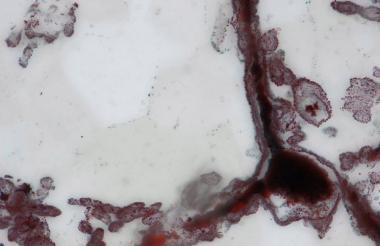 En capas de cuarzo del cinturón de Nuvvuagittuq, en Canadá, fueron detectados los microfósiles.