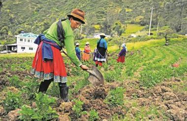 Imagen para ilustrar nota sobre mujeres trabajado en el campo.