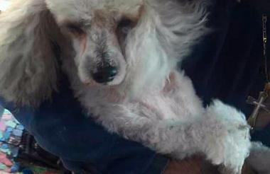 La perrita fue encontrada en buen estado de salud.
