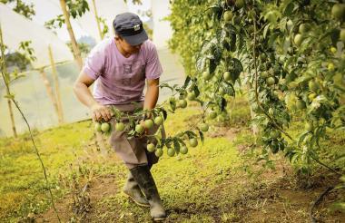 Campesinos de la región esperan que después de la firma de paz que fue impulsada desde el Gobierno, se proceda a hacer grandes inversiones en el campo.
