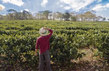 Falta de inversiones en el campo es motivo de preocupación para los gremios en la región Caribe colombiana