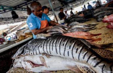 Orlando Ortega abre parte de los pescados que ha vendido, mientras asegura que el bagre ha sido uno de los favoritos por los compradores durante esta temporada de Semana Santa.