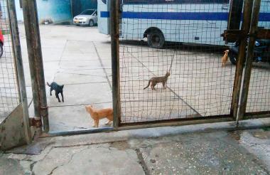 Los gatos deambulan sin problema por las instalaciones del centro penitenciario.