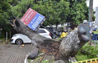 Escena del árbol caído.