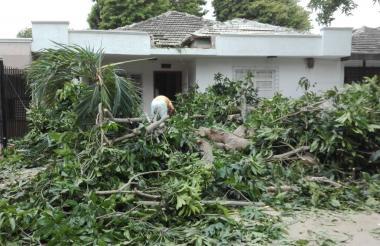 Fachada de vivienda afectada por árbol caído.