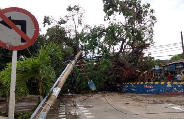 El gigantesco árbol que cayó en la carrera 50 con calle 61.