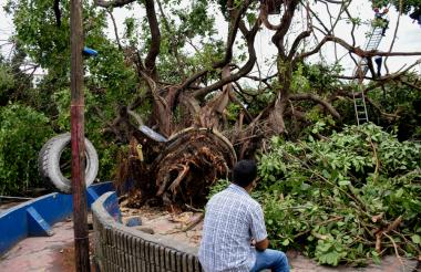 Un vecino del barrio El Prado observa los daños ocasionados por la caída del árbol en la carrera 50 con calle 61.