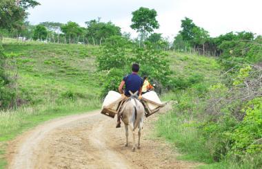 Los Montes de María es considerada una de las subregiones más productivas de Sucre y la Costa Caribe.