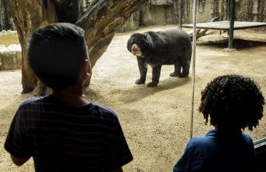 Niños observan al oso 'Chucho' en exhibición en el Zoológico de Barranquilla.