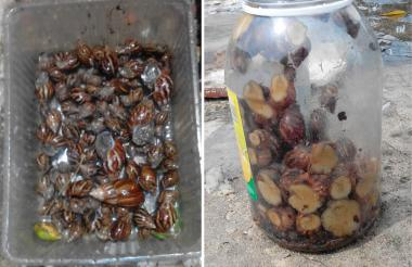 Moluscos encontrados en Soledad.