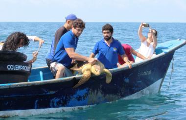 Momentos en que liberan a una de las tortugas.