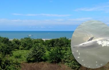 Playa donde fue rescatado junto  a la fotografía del delfín rescatado.