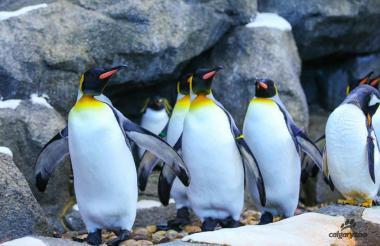 Los pingüinos del Zoológico.