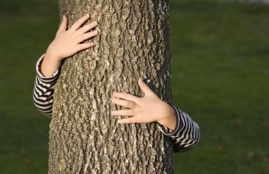 Un niño pequeño juega abrazando el tronco de un árbol frutal.
