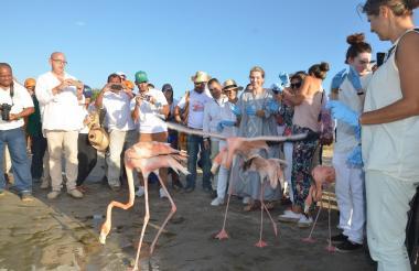 Clemencia de Santos, se mostró emocionada al liberar uno de los animales.