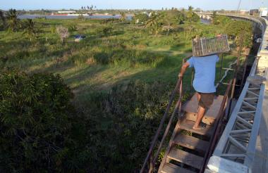 Un hombre sube por la escalera habilitada para llegar desde el puente Pumarejo a la Isla Pensilvania o Rondón, propuesta por el director de Cormagdalena.