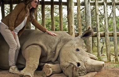 En Kenia murió el último rinoceronte blanco.
