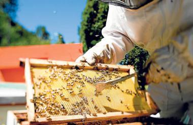 Un apicultor extrae miel de una de las 13.000 colmenas que hay en Córdoba.